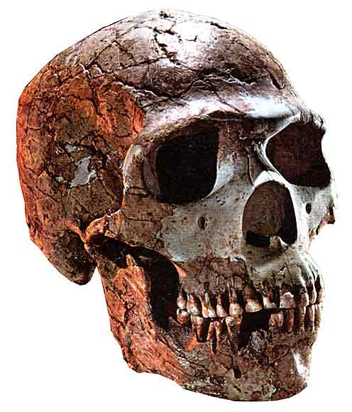 http://www.rationalisme.org/photos/neanderthal_skull_big.jpg